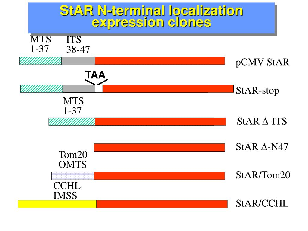 StAR N-terminal localization expression clones