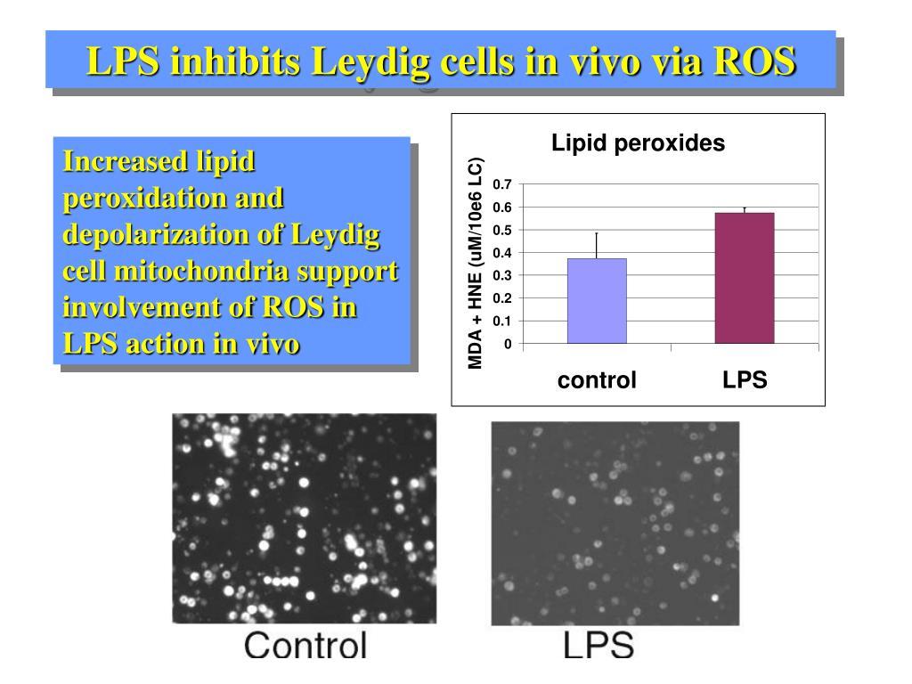 LPS inhibits Leydig cells in vivo via ROS