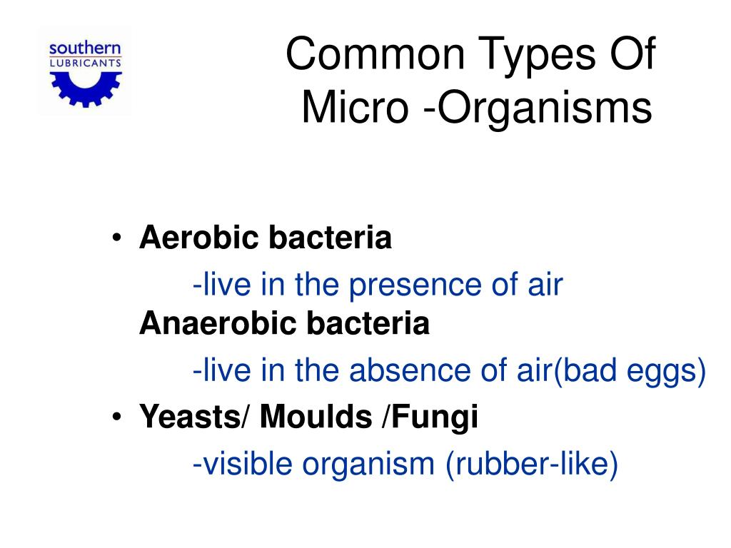 Common Types Of