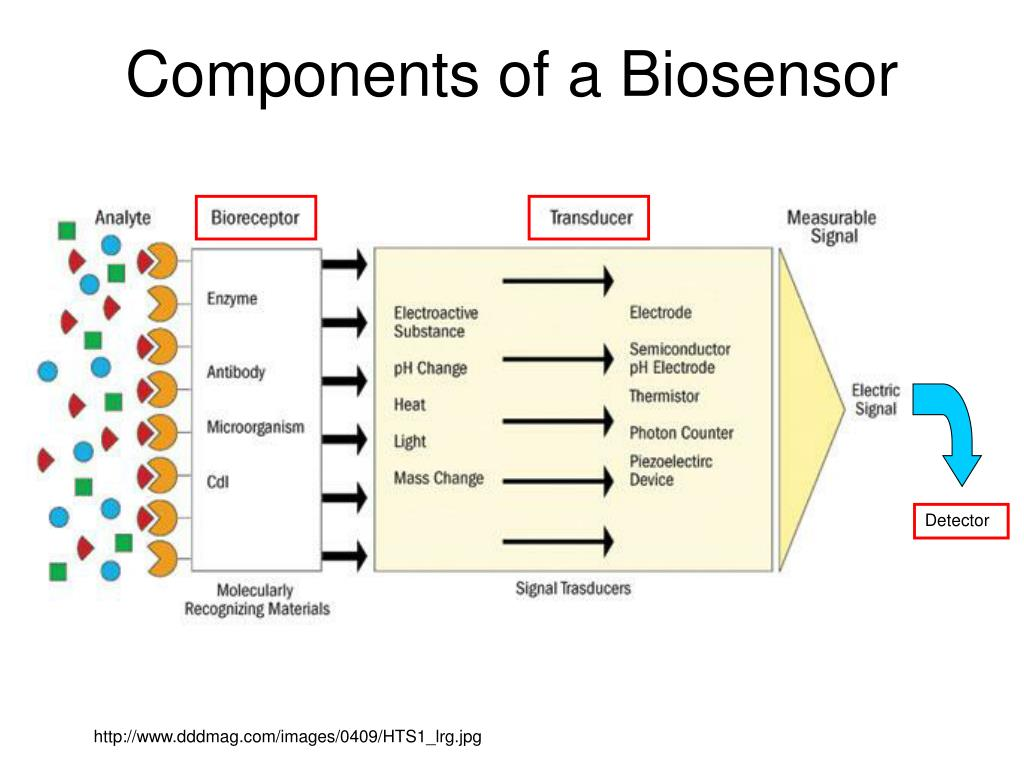Components of a Biosensor