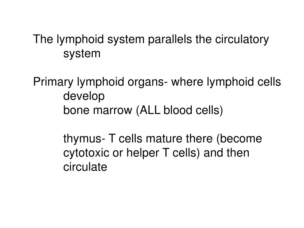 The lymphoid system parallels the circulatory
