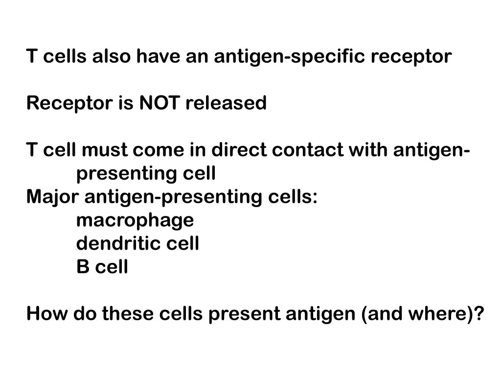 T cells also have an antigen-specific receptor