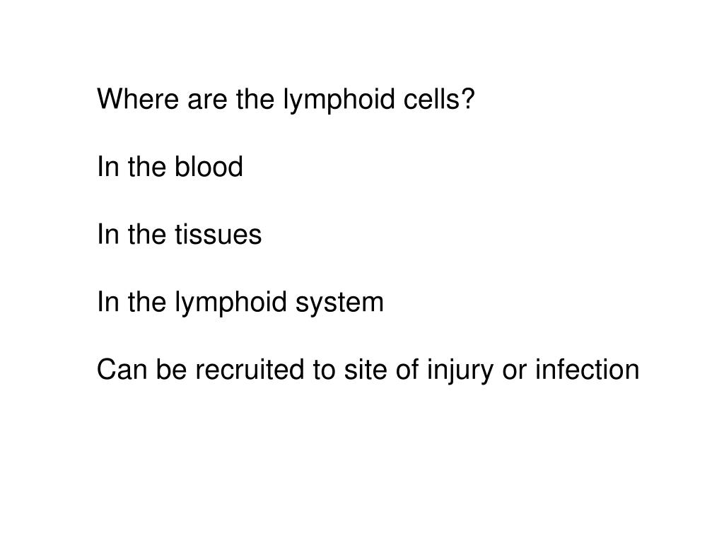 Where are the lymphoid cells?