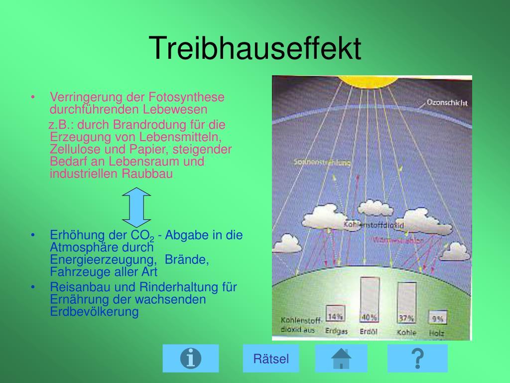 Bedeutung Der Fotosynthese