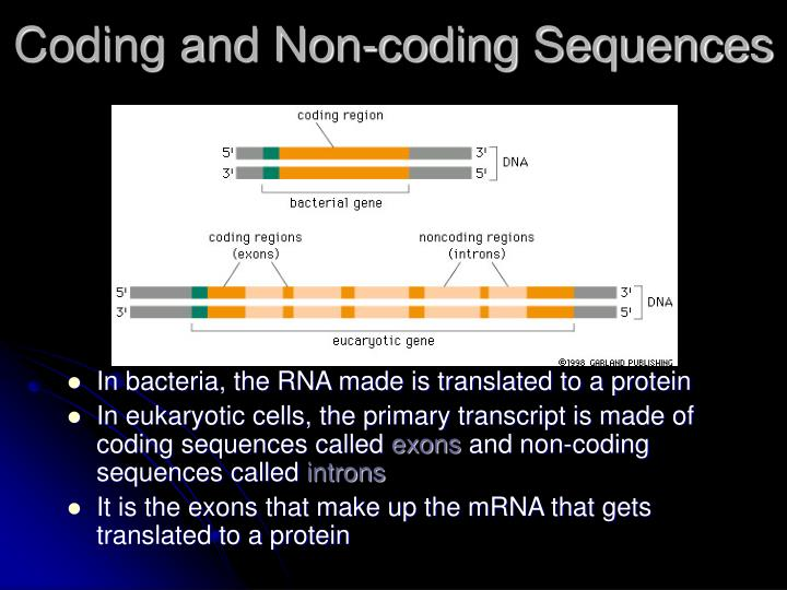 Coding and Non-coding Sequences