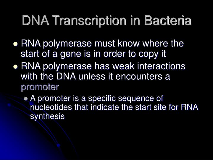 DNA Transcription in Bacteria