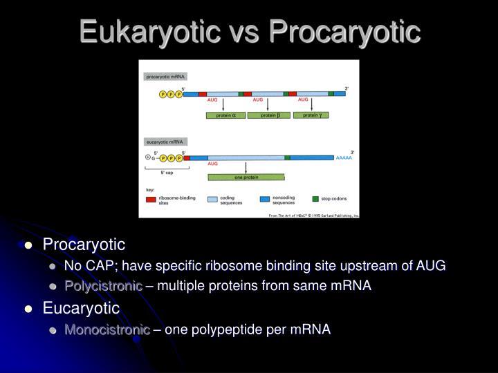 Eukaryotic vs Procaryotic