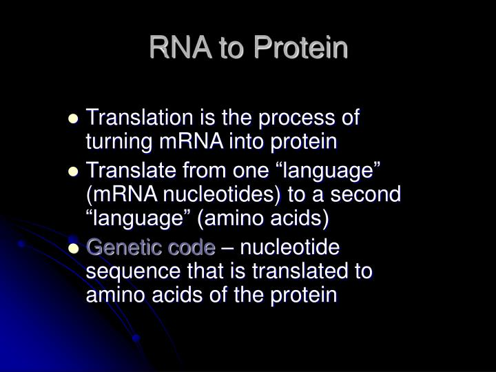 RNA to Protein