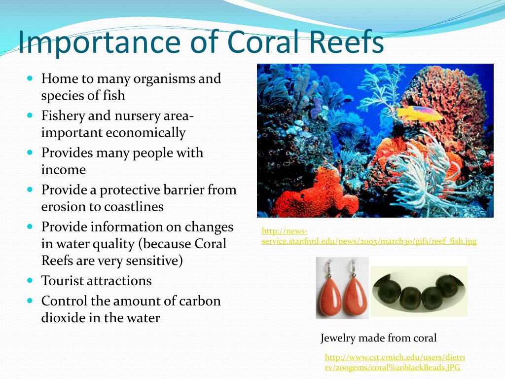 the role and importance of coral reefs In fact, coral reefs might become the first marine ecosystem to  especially  important role regulating algal cover on coral reefs, particularly where sea urchin .