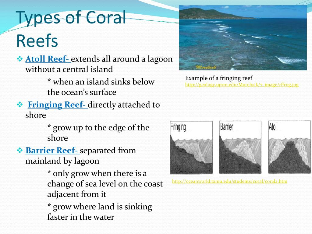 types of reefs diagram ppt - coral reefs powerpoint presentation - id:427142 types of car fuse boxes
