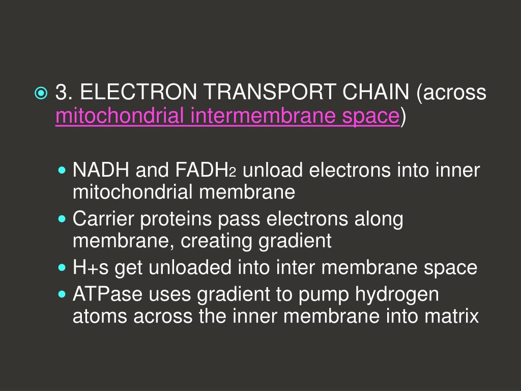 3. ELECTRON TRANSPORT CHAIN (across
