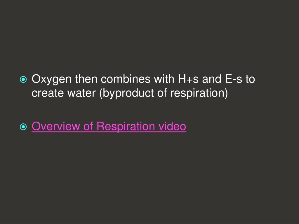 Oxygen then combines with H+s and E-s to create water (byproduct of respiration)
