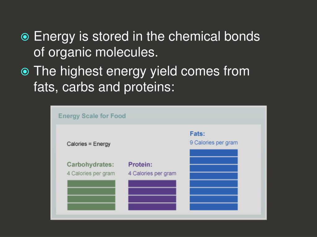 Energy is stored in the chemical bonds of organic molecules.