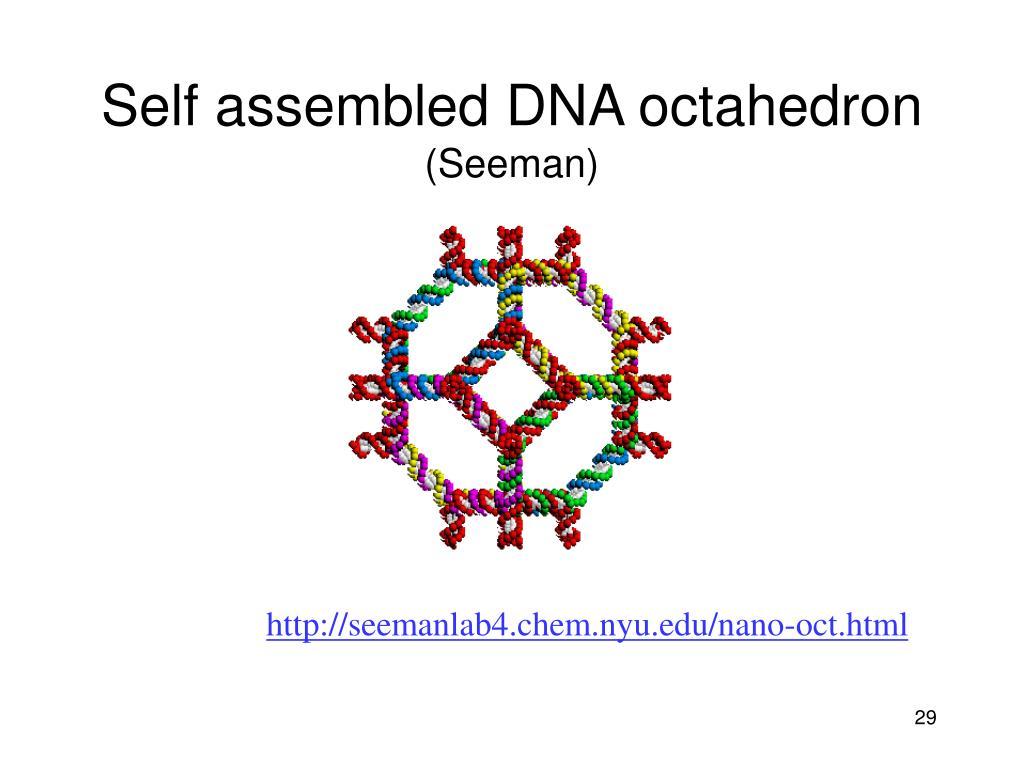 Self assembled DNA octahedron