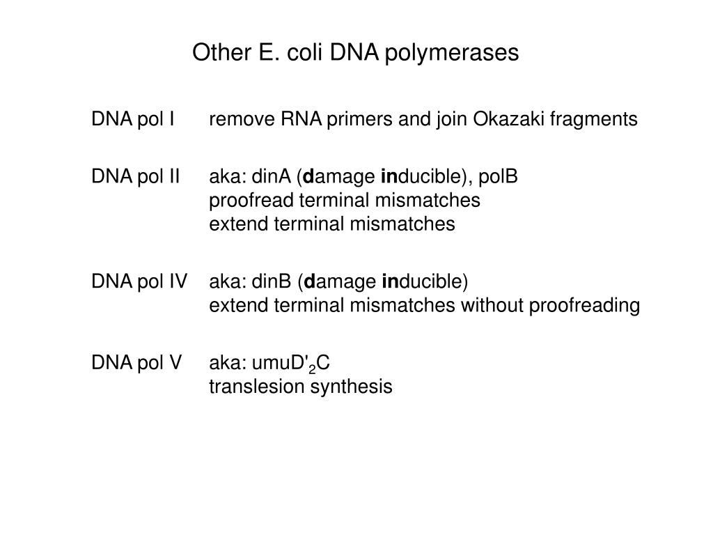 Other E. coli DNA polymerases