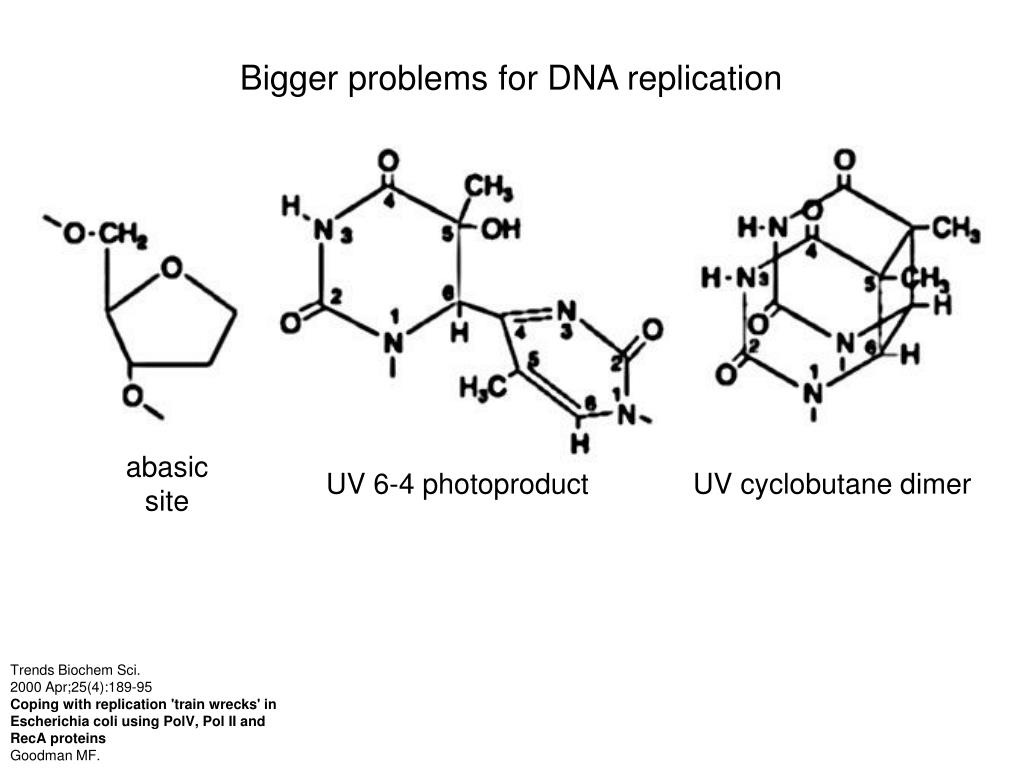 Bigger problems for DNA replication