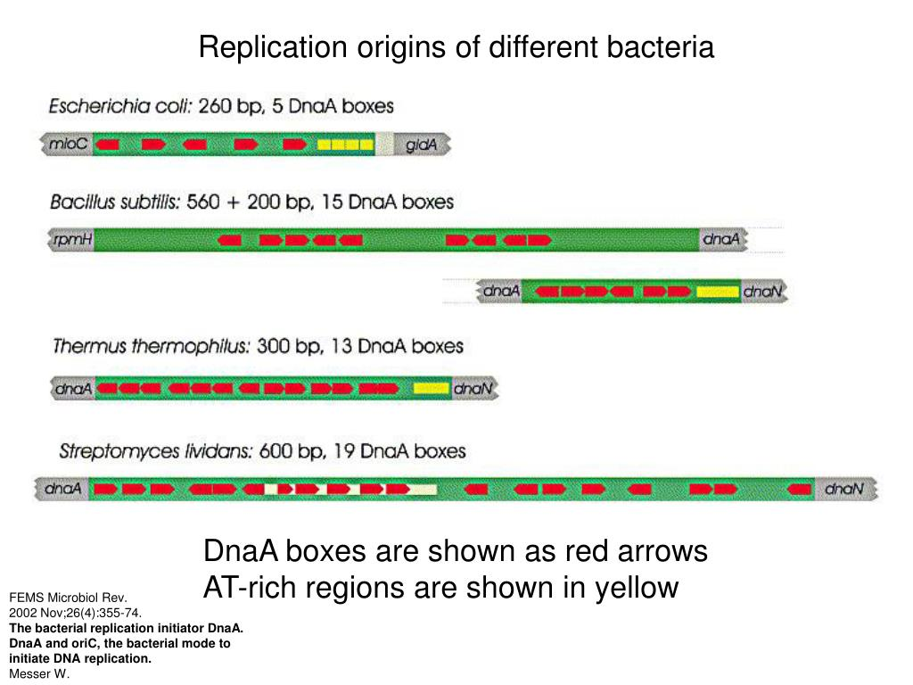 Replication origins of different bacteria