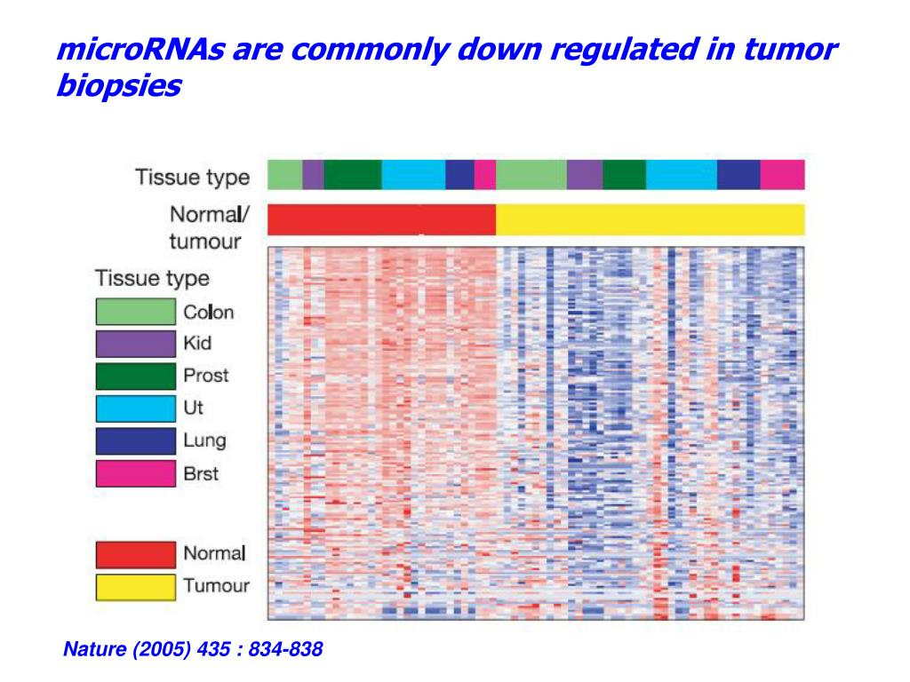 microRNAs are commonly down regulated in tumor biopsies