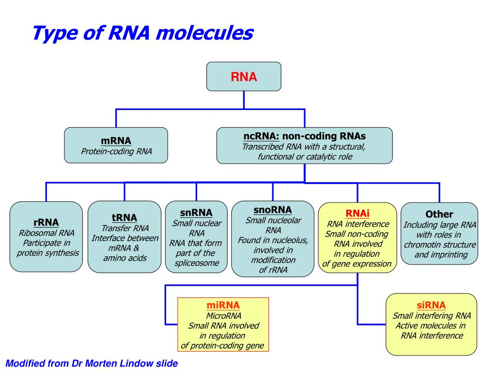 Type of RNA molecules