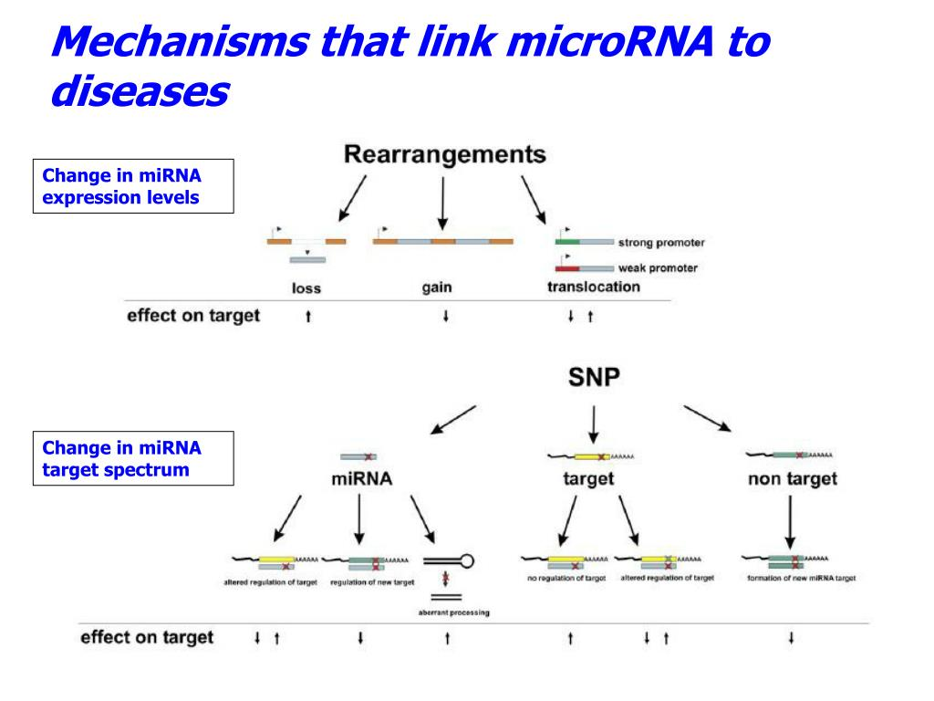 Mechanisms that link microRNA to diseases