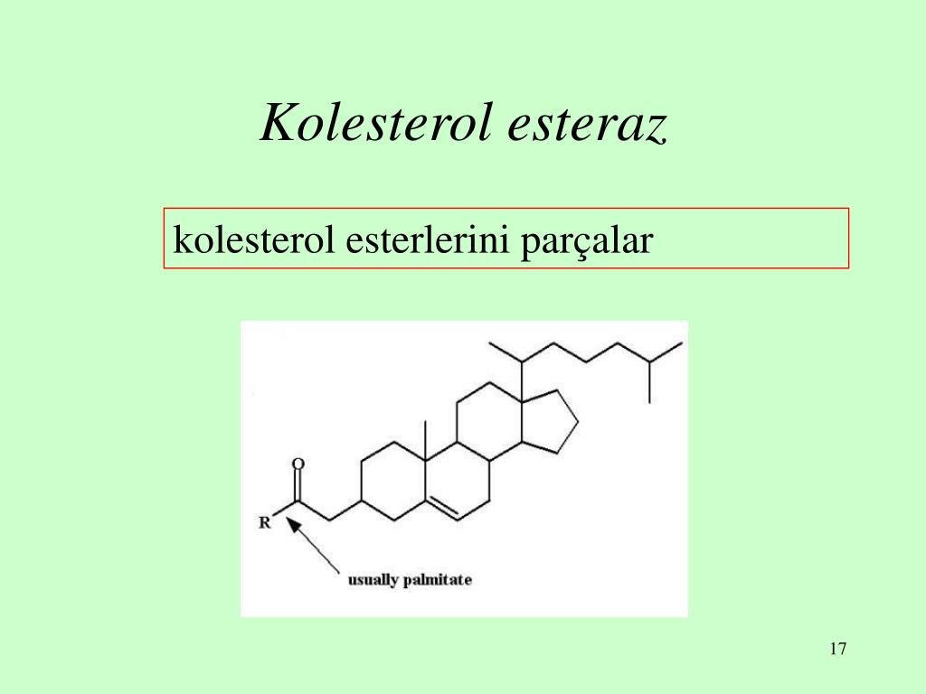 Kolesterol esteraz