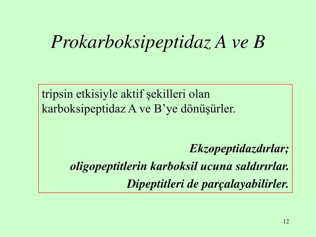 Prokarboksipeptidaz A ve B