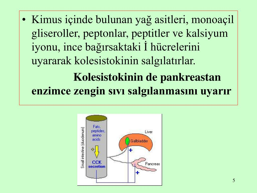 Kimus içinde bulunan yağ asitleri, monoaçil gliseroller, peptonlar, peptitler ve kalsiyum iyonu, ince bağırsaktaki İ hücrelerini uyararak kolesistokinin salgılatırlar.