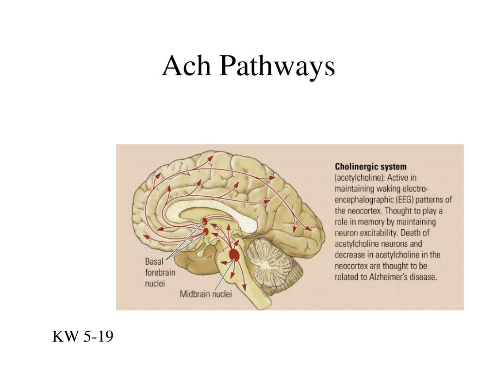 Ach Pathways
