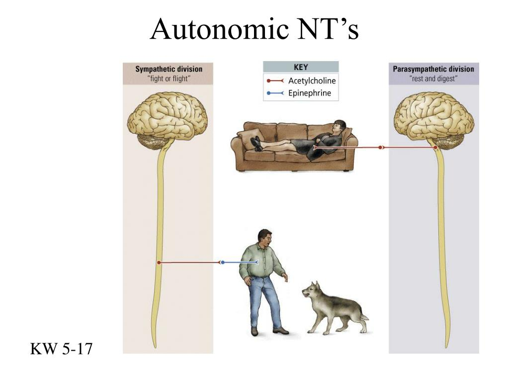 Autonomic NT's