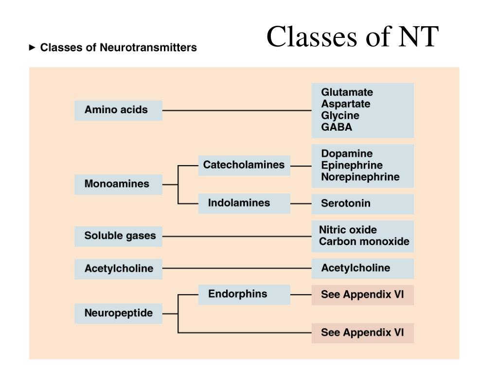 Classes of NT