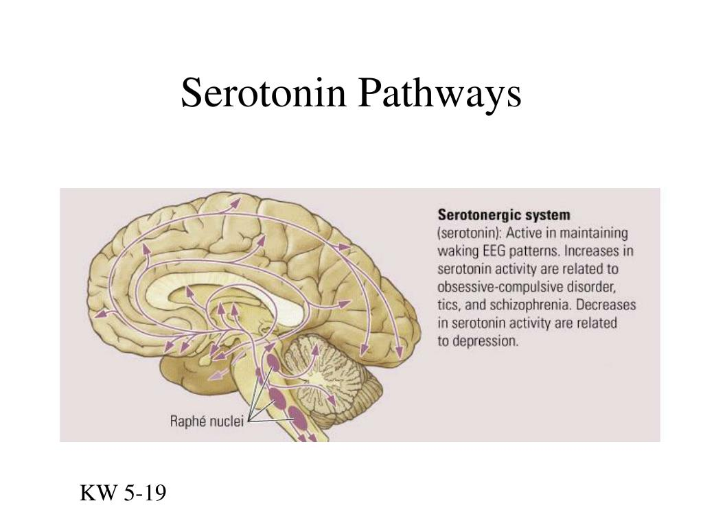 Serotonin Pathways