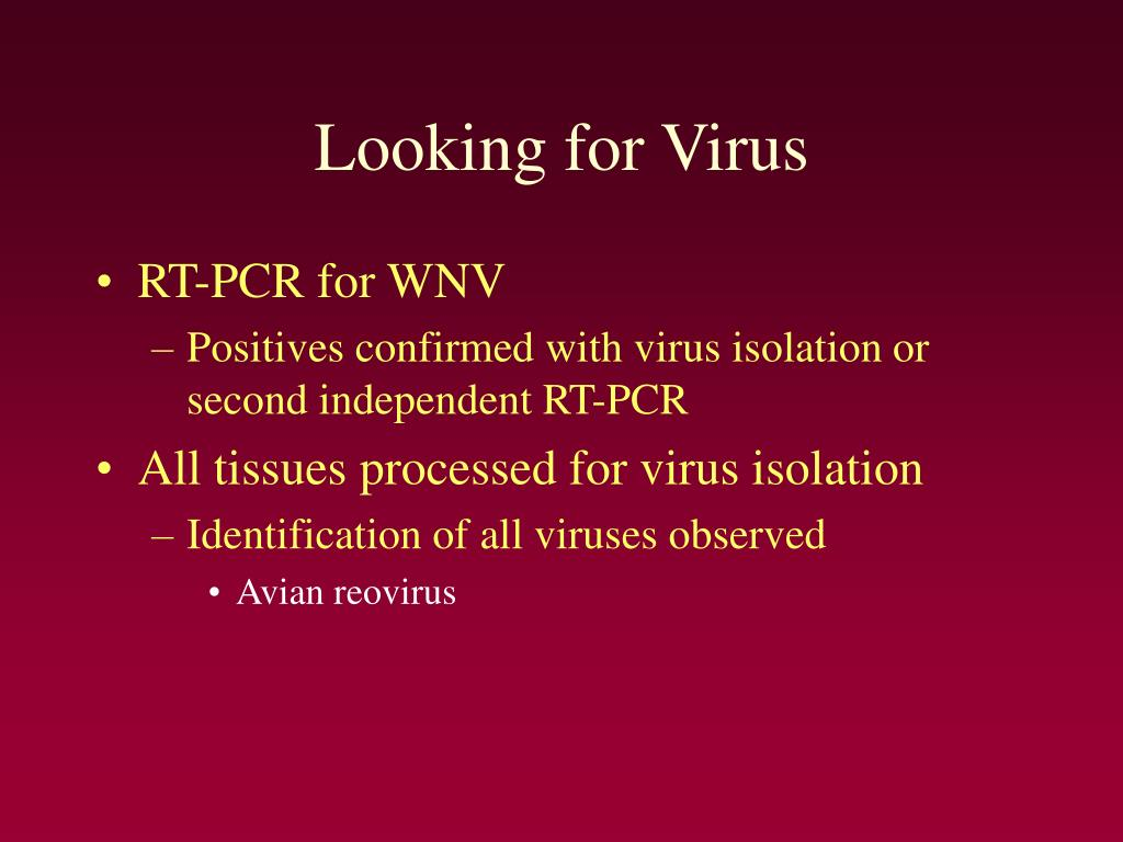 Looking for Virus