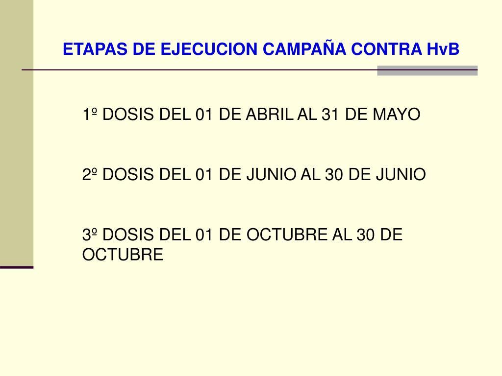 ETAPAS DE EJECUCION CAMPAÑA CONTRA HvB