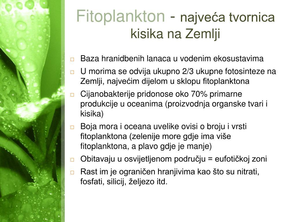 Fitoplankton