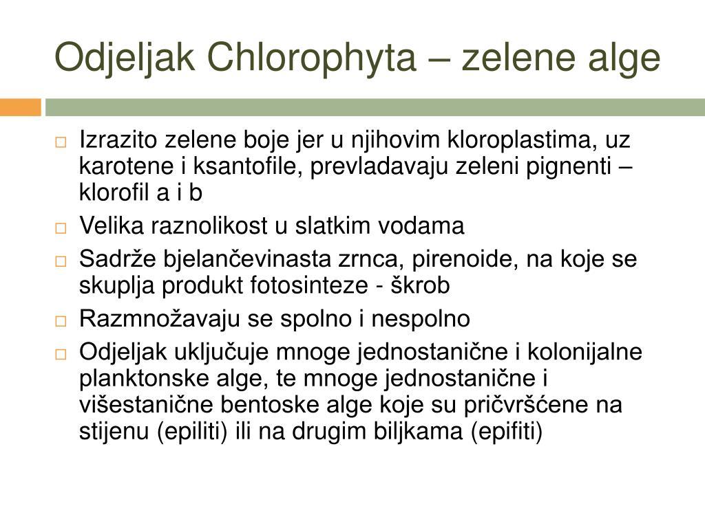Odjeljak Chlorophyta – zelene alge