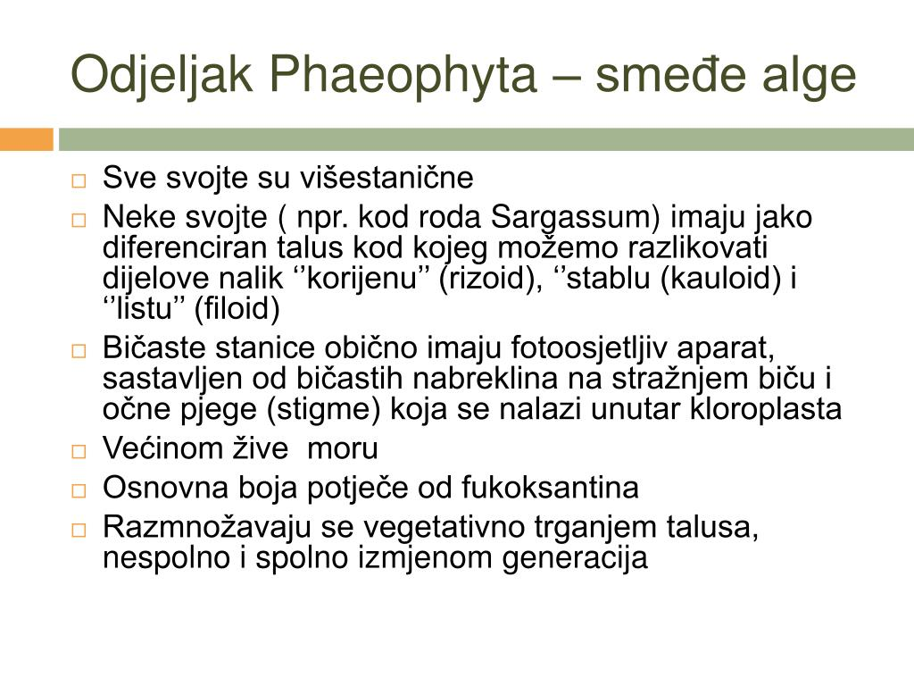 Odjeljak Phaeophyta – smeđe alge