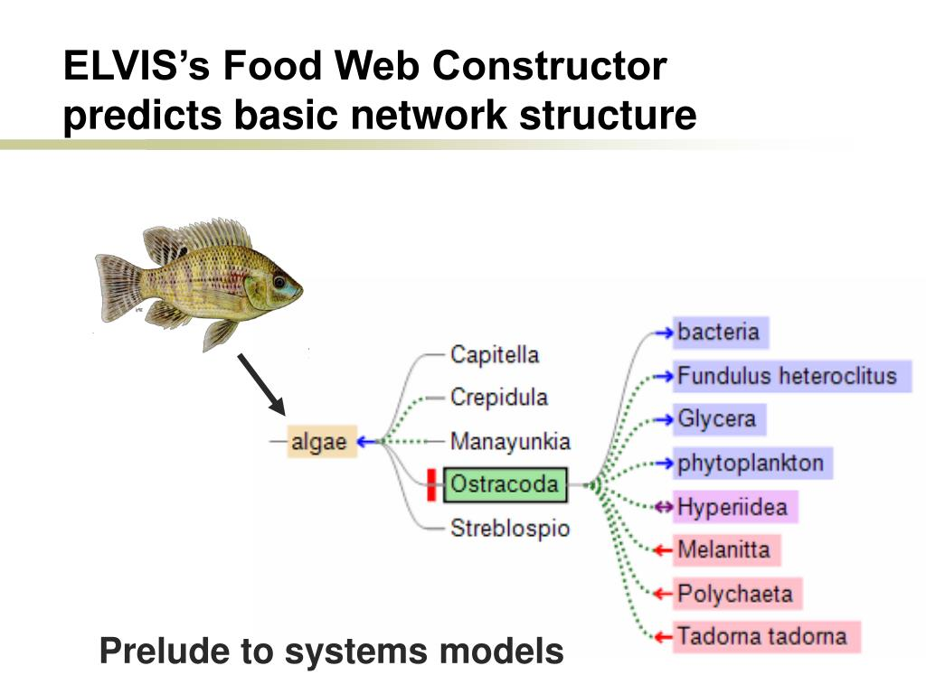 ELVIS's Food Web Constructor