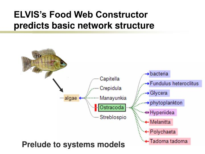 Elvis s food web constructor predicts basic network structure l.jpg