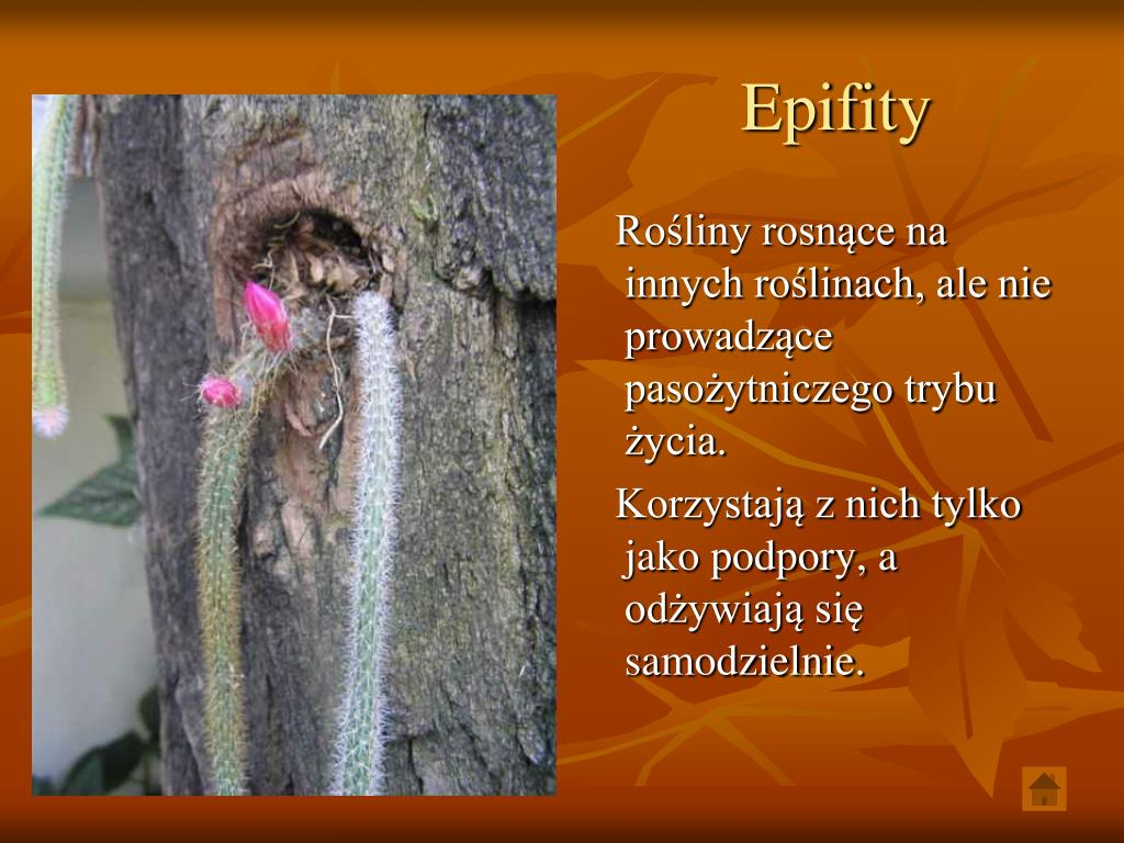 Epifity