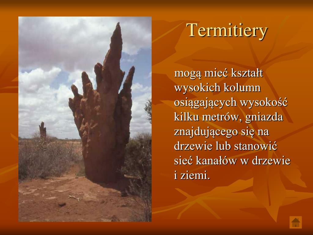 Termitiery
