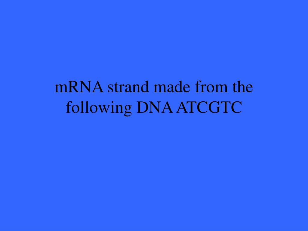 mRNA strand made from the following DNA ATCGTC