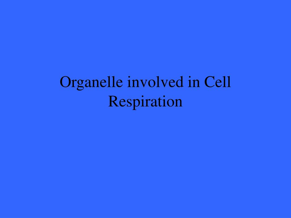 Organelle involved in Cell Respiration