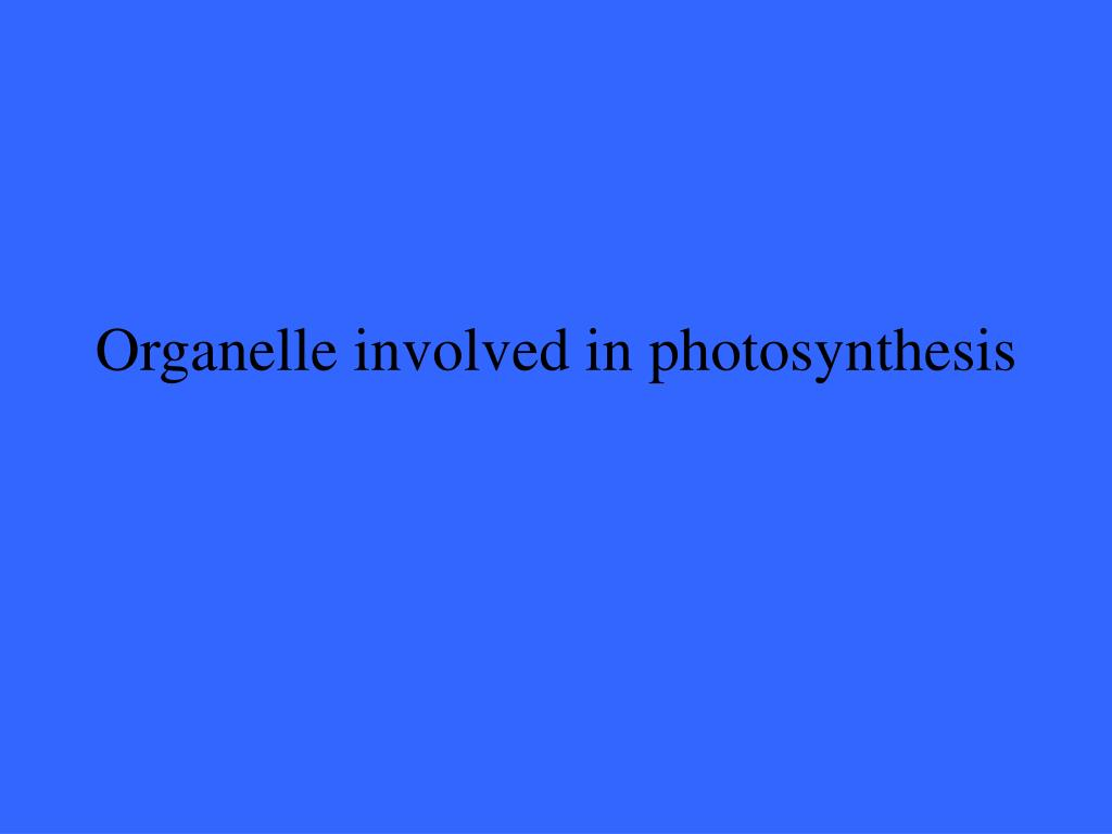 Organelle involved in photosynthesis