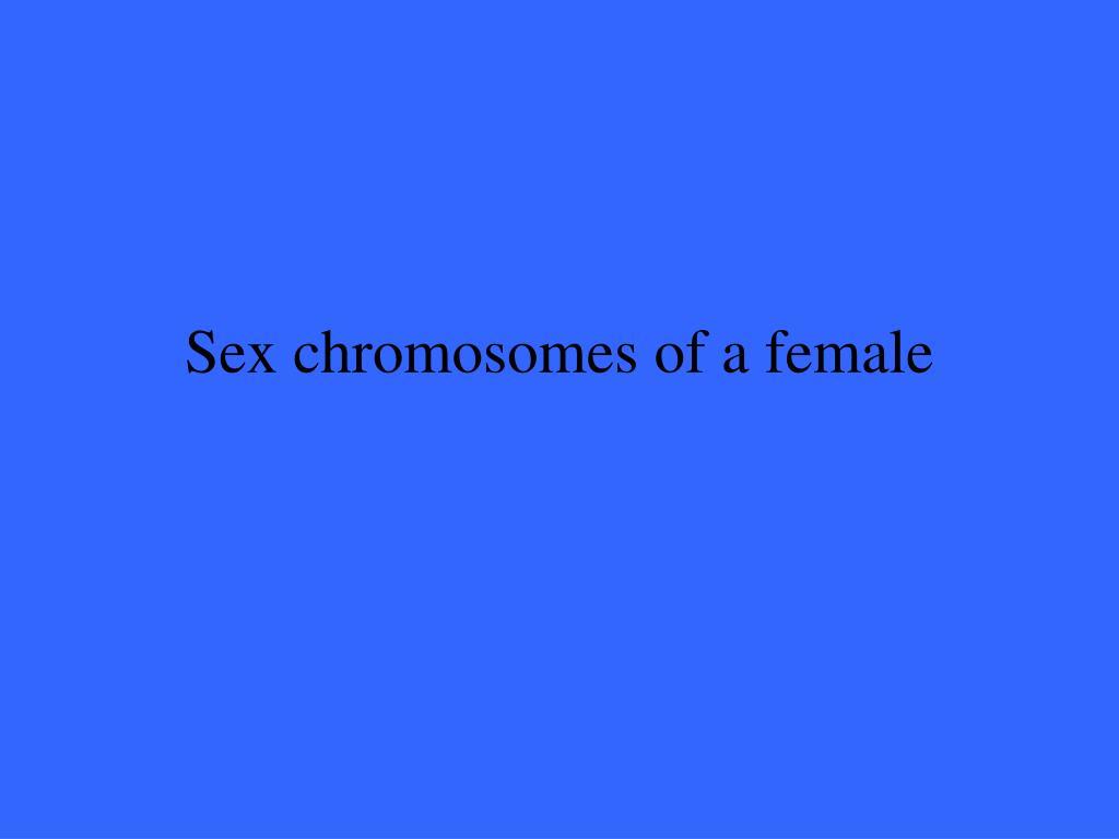 Sex chromosomes of a female