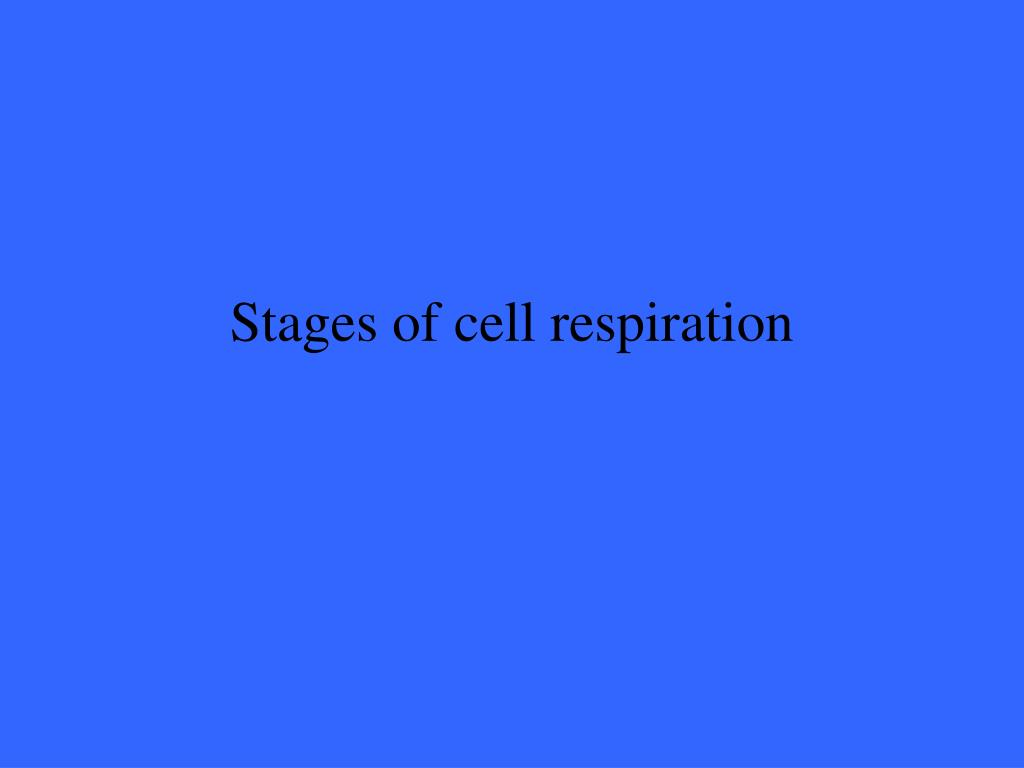 Stages of cell respiration