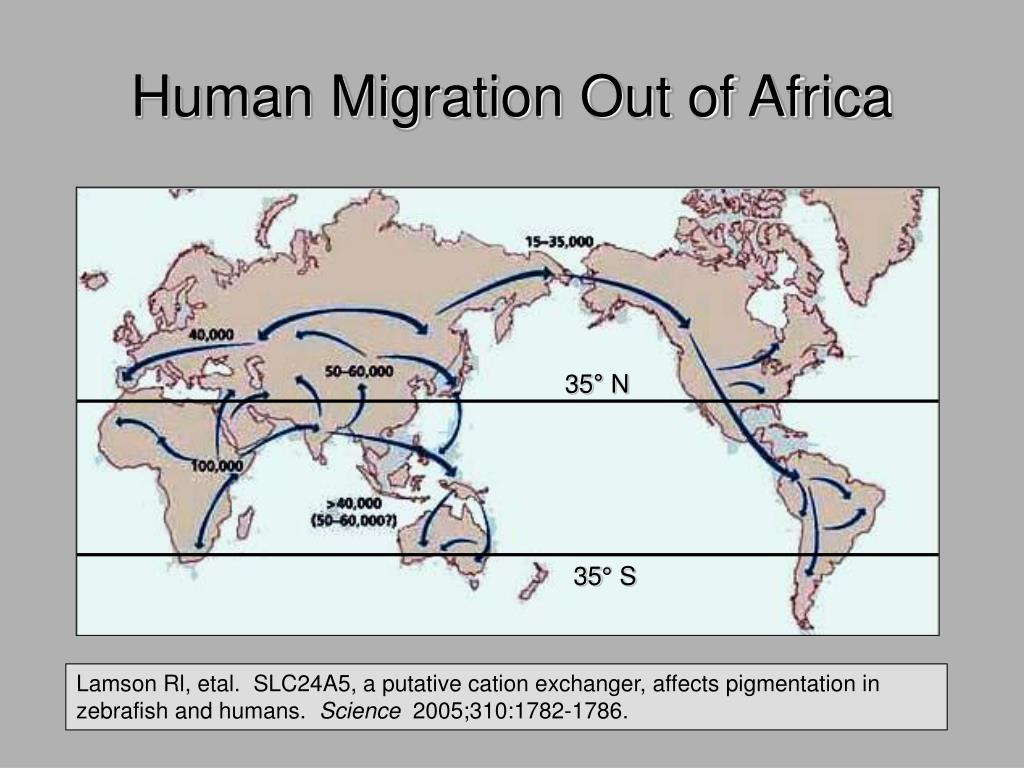Human Migration Out of Africa