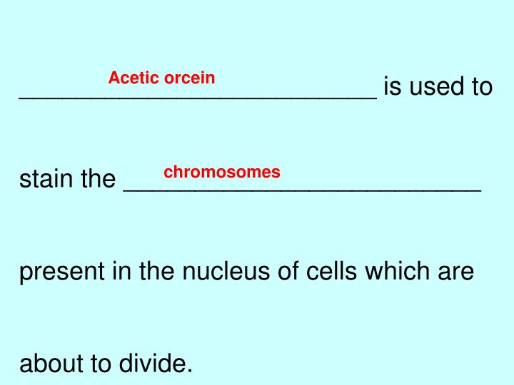 Acetic orcein