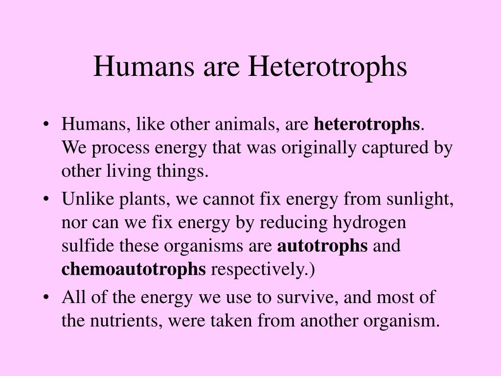 Humans are Heterotrophs