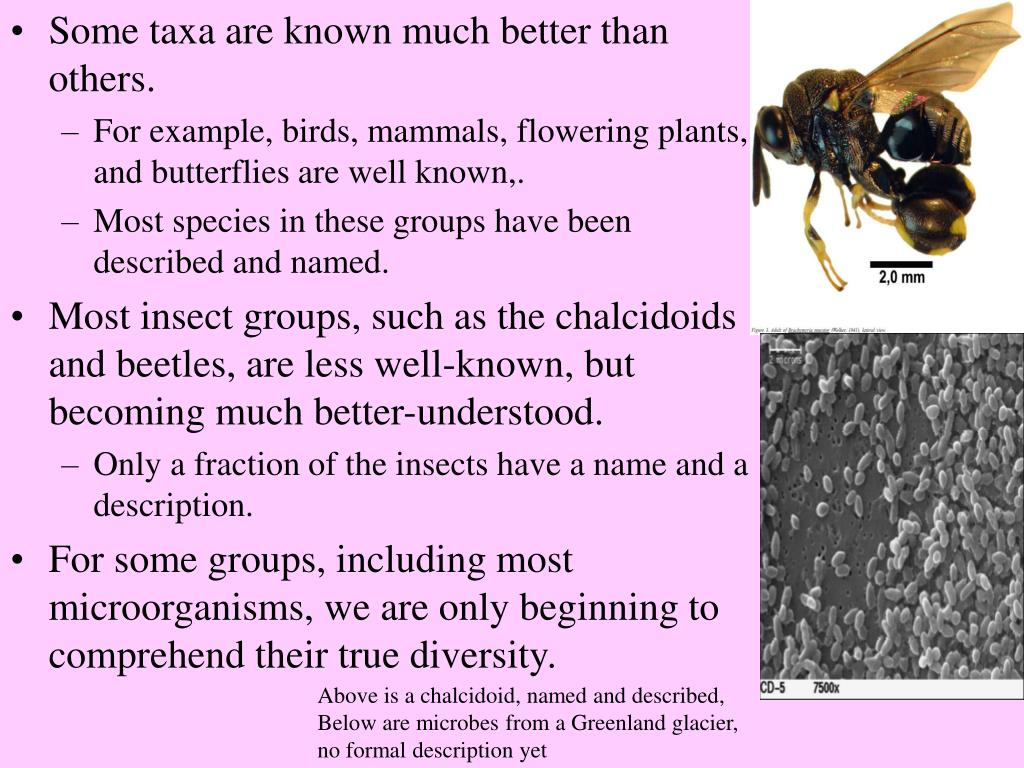 Some taxa are known much better than others.