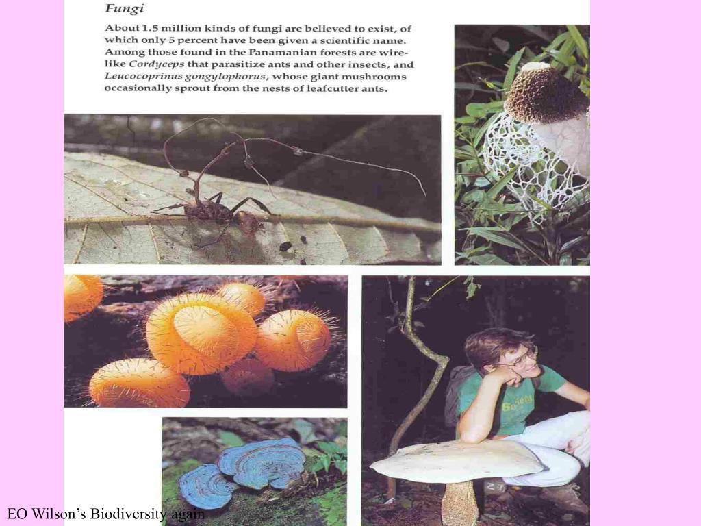 EO Wilson's Biodiversity again